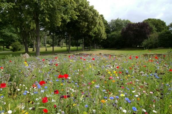 beautiful-environment-field-570041